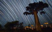 Baobab and night sky with star trails. Madagascar