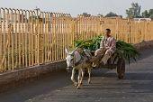 Fodder Cart