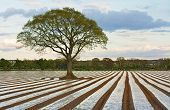 Lone Tree In Ploughed Agricultural Field