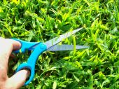 Going Green With Handy Scissors