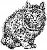 Domestic Cat.eps