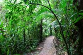 image of humidity  - Tourist path in rainforest - JPG