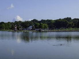 stock photo of gator  - A gator having lunch in the lake - JPG