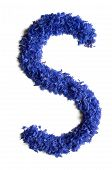 Letter S Made Of Flowers (cornflowers) Isolated On White Background