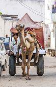 Camel Taxi In Pushkar