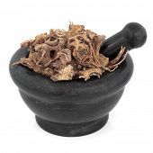 Lovage ligusticum root herb chinese herbal medicine in a black stone mortar with pestle over white b