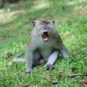 Enraging Monkey poster