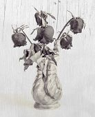 Dried Roses In A Vase Effect Black And White