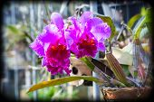 Purple Orchid Flowers, Holga Color Effects