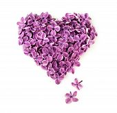 Lilac Flowers In Shape Of Heart