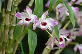 stock photo of orquidea  - photo of the three orchids with pink and white color - JPG