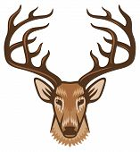 pic of deer horn  - deer head vector illustration on white background - JPG