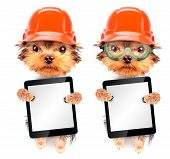 dog  dressed as builder with tablet pc