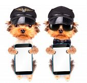 dog  dressed as pilot with phone