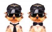 dog  dressed as pilot