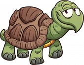 foto of green turtle  - Cartoon turtle - JPG