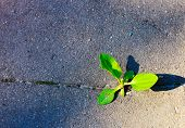 Fighting For Plant Life In The Urban Environment