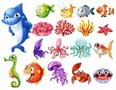 image of creatures  - Various sea creatures on white - JPG