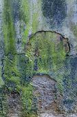 Moss covered stonework