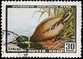 Mallard Stamp