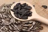 Sunflower Seeds Black - White On A Spoon