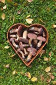 Boletus Badius (xerocomus Badius) Mushroom In Heart Form Basket