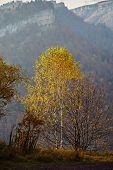 Birch mountain autumn mist