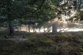 Sun Beams Shining Through Trees In Forest On Foggy Autumn Fall Sunrise Landscape