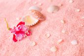 Spa Tender Concept With Pink Flower Fuchsia, Seashells On Delicate Terry Texture, Closeup