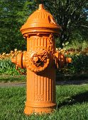 stock photo of disaster preparedness  - A bright orange fire hydrant stands in the grass in front of a backdrop of orange tulips - JPG