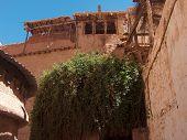 Der brennende Busch am St Catherine's Monastery, Sinai, Ägypten