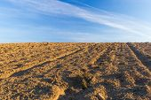 picture of plowed field  - Beautiful plowed field autumnal landscape photographed in nice morning light under blue sky - JPG