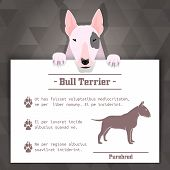 foto of bulls  - bull terrier breed dog banner with text - JPG