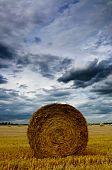 Rolled Wheat Field