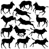 stock photo of wildebeest  - Set of eps8 editable vector silhouettes of adult wildebeest standing - JPG