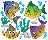 stock photo of piranha  - Piranha fishes collection  - JPG