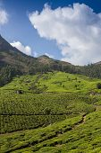 stock photo of cameron highland  - Tea plantation Cameron highlands in the India - JPG