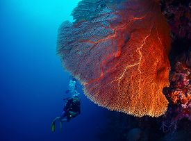 stock photo of bottomless  - Lady diver exploring tropical bright reef with big hard coral on foreground - JPG