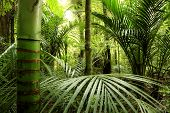 Bosque tropical