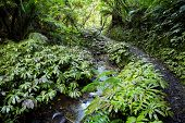 Lush New Zealand tropical forest