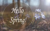 Hello, Spring Picture. Spring Picture Text Hello Spring poster