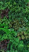 Vertical Garden With Tropical Green Leaf, Contrast poster