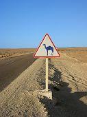 Camel Traffic Sign