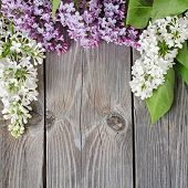 The beautiful lilac on a wooden surface