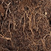 Roots in a soil background
