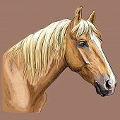 Colorful Hand Drawing Portrait Of Palomino Horse. Horse Head  In Profile Isolated Vector Hand Drawin poster