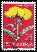YUGOSLAVIA - CIRCA 1958: A stamp printed in Yugoslavia shows Moonshine Yarrow, series, circa 1958
