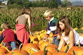 Searching For The Perfect Pumpkin