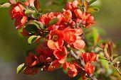 Red Spring Branch