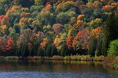 Allegheny state park in New York state